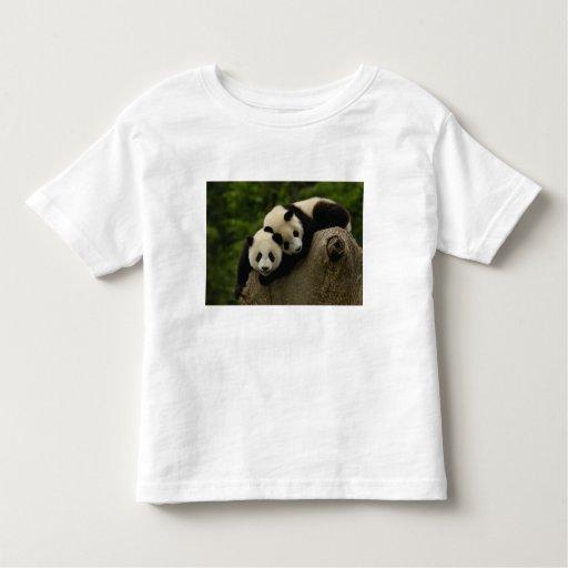 Giant panda babies Ailuropoda melanoleuca) 6 Tee Shirt