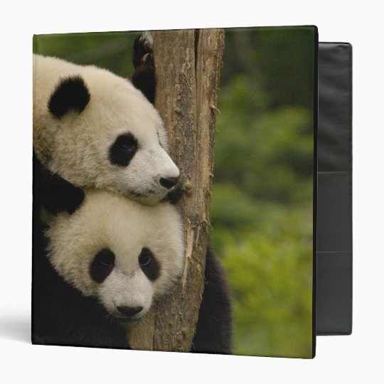 Giant panda babies Ailuropoda melanoleuca) 7 Binder