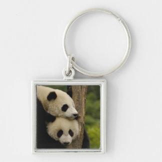Giant panda babies Ailuropoda melanoleuca) 7 Silver-Colored Square Keychain