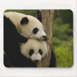 Giant panda babies Ailuropoda melanoleuca) 7 Mouse Pad
