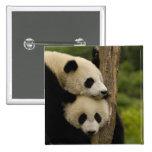 Giant panda babies Ailuropoda melanoleuca) 7 Pins