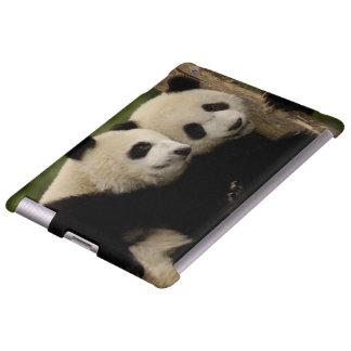 Giant panda babies Ailuropoda melanoleuca) 8