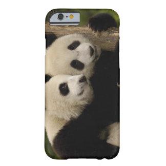 Giant panda babies Ailuropoda melanoleuca) 8 Barely There iPhone 6 Case
