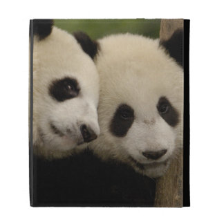 Giant panda babies Ailuropoda melanoleuca) 8 iPad Folio Cover