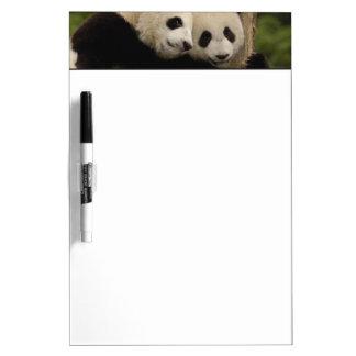 Giant panda babies Ailuropoda melanoleuca) 8 Dry-Erase Board