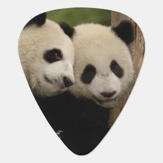 Giant panda babies Ailuropoda melanoleuca) 8 Guitar Pick