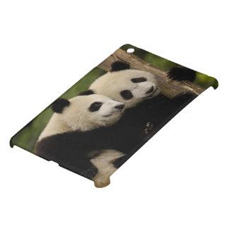 Giant panda babies Ailuropoda melanoleuca) 8 Case For The iPad Mini