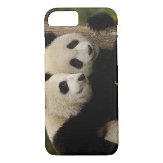 Giant panda babies Ailuropoda melanoleuca) 8 iPhone 8/7 Case