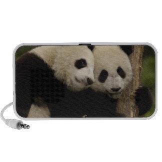 Giant panda babies Ailuropoda melanoleuca) 8 iPod Speaker