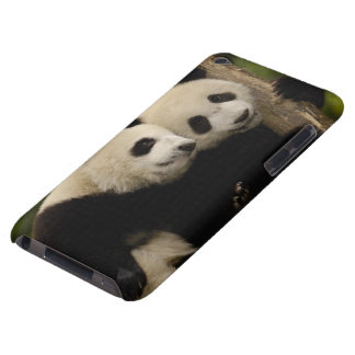 Giant panda babies Ailuropoda melanoleuca) 8 iPod Touch Cover