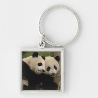Giant panda babies Ailuropoda melanoleuca) 8 Silver-Colored Square Keychain