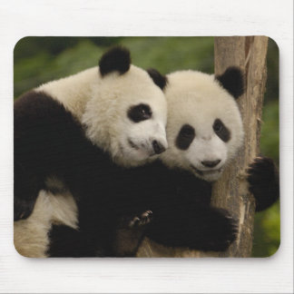 Giant panda babies Ailuropoda melanoleuca) 8 Mouse Pads