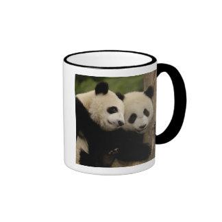 Giant panda babies Ailuropoda melanoleuca) 8 Mug