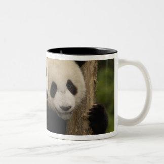Giant panda babies Ailuropoda melanoleuca) 8 Coffee Mugs