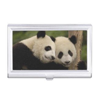 Giant panda babies Ailuropoda melanoleuca) 8 Business Card Holder