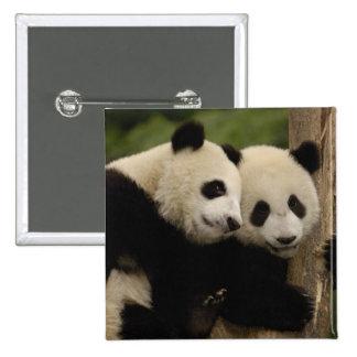 Giant panda babies Ailuropoda melanoleuca) 8 Pinback Button