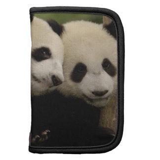 Giant panda babies Ailuropoda melanoleuca) 8 Folio Planner