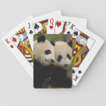 "Giant panda babies Ailuropoda melanoleuca) 8 Playing Cards<br><div class=""desc"">Giant panda babies (Ailuropoda melanoleuca) Family: Ailuropodidae Wolong China Conservation and Research Center for the Giant Panda within Wolong Reserve Sichuan Province CHINA   Pete Oxford / DanitaDelimont.com</div>"
