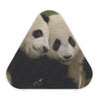 Giant panda babies Ailuropoda melanoleuca) 8 Speaker