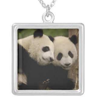 Giant panda babies Ailuropoda melanoleuca) 8 Square Pendant Necklace