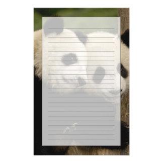 Giant panda babies Ailuropoda melanoleuca) 8 Stationery