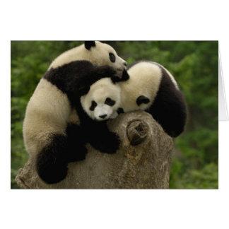 Giant panda babies Ailuropoda melanoleuca) 9 Card