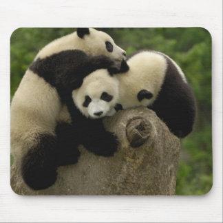 Giant panda babies Ailuropoda melanoleuca) 9 Mouse Pad