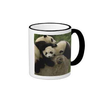 Giant panda babies Ailuropoda melanoleuca) 9 Coffee Mugs