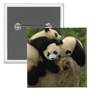Giant panda babies Ailuropoda melanoleuca) 9 Pinback Button