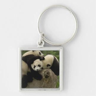 Giant panda babies Ailuropoda melanoleuca) 9 Silver-Colored Square Keychain