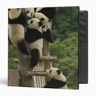 Giant panda babies Ailuropoda melanoleuca) 3 Ring Binders
