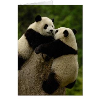 Giant panda babies (Ailuropoda melanoleuca) Card