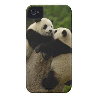 Giant panda babies (Ailuropoda melanoleuca) iPhone 4 Cases