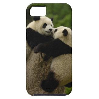 Giant panda babies (Ailuropoda melanoleuca) iPhone SE/5/5s Case