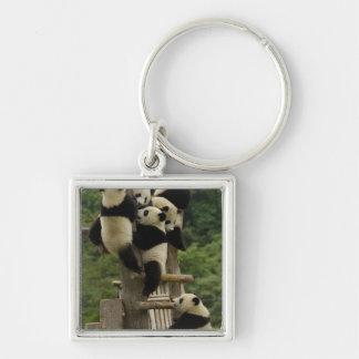 Giant panda babies Ailuropoda melanoleuca) Silver-Colored Square Keychain