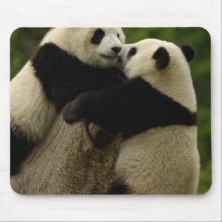 Giant panda babies (Ailuropoda melanoleuca) Mousepad