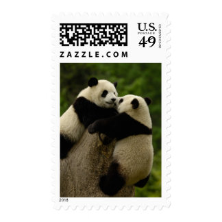 Giant panda babies (Ailuropoda melanoleuca) Postage Stamp