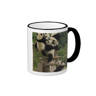 Giant panda babies Ailuropoda melanoleuca) Ringer Coffee Mug