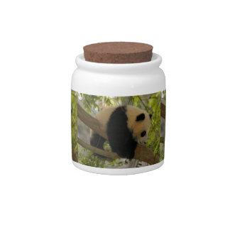 giant-panda-baby12x9 candy jars