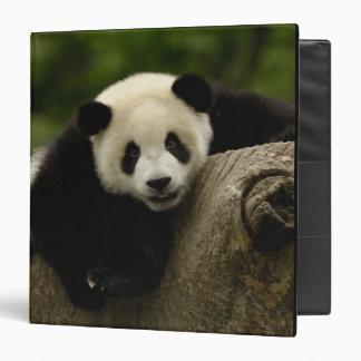 Giant panda baby Ailuropoda melanoleuca) 10 Vinyl Binder
