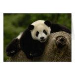 Giant panda baby Ailuropoda melanoleuca) 10 Greeting Cards