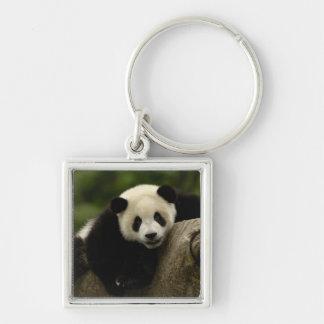 Giant panda baby Ailuropoda melanoleuca) 10 Silver-Colored Square Keychain