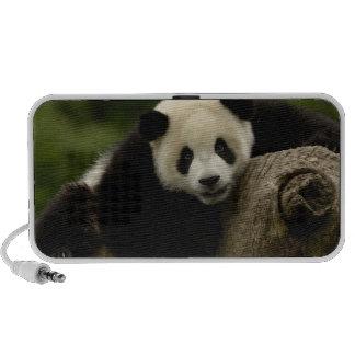 Giant panda baby Ailuropoda melanoleuca) 10 Speaker