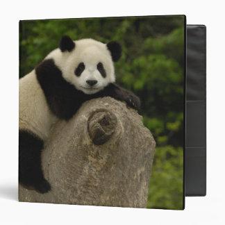 Giant panda baby Ailuropoda melanoleuca) 11 3 Ring Binder