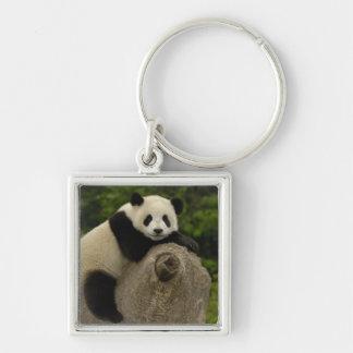 Giant panda baby Ailuropoda melanoleuca) 11 Silver-Colored Square Keychain