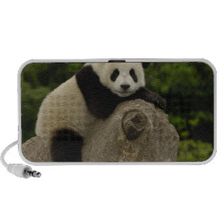 Giant panda baby Ailuropoda melanoleuca) 11 Travelling Speaker