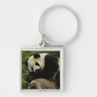 Giant panda baby Ailuropoda melanoleuca) 12 Silver-Colored Square Keychain