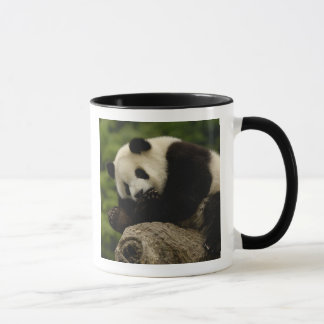 Giant panda baby Ailuropoda melanoleuca) 12 Mug