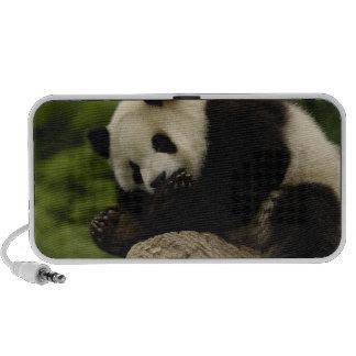 Giant panda baby Ailuropoda melanoleuca) 12 Portable Speakers
