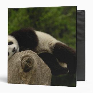 Giant panda baby Ailuropoda melanoleuca) 13 3 Ring Binder
